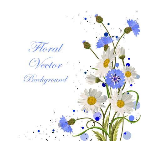 cornflowers: Beautiful daisies and cornflowers on white background.