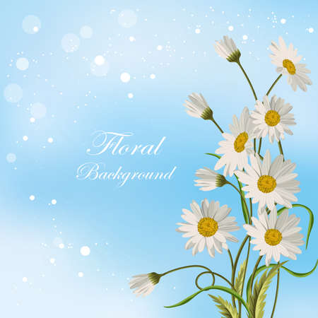 Beautiful white daisies on blue background. Floral vector background. Illustration