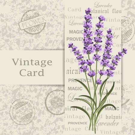 postcard: Beautiful lavender flowers for invitation card. Vintage postcard background. Vector illustration.