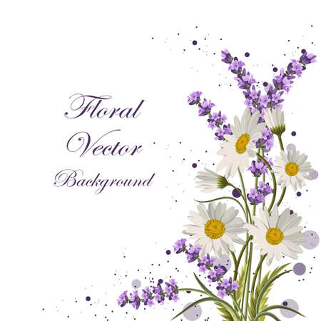 Beautiful daisies and lavender flowers on white background.
