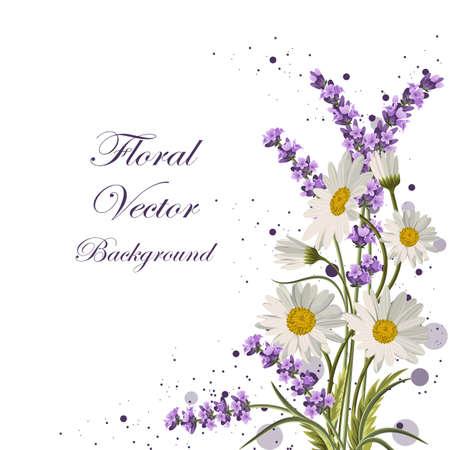 Bella margherite e fiori di lavanda su sfondo bianco.