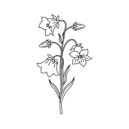Vector illustration of bell flowers in black and white style.