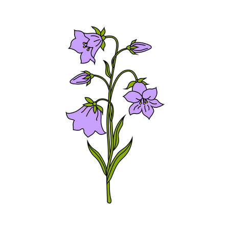Vector illustration of bell flowers isolated on white background.