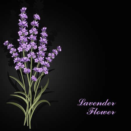 Beautiful lavender flowers on black background.
