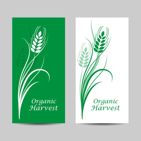 Set of vertical banners. Wheat spikelet on white and green background