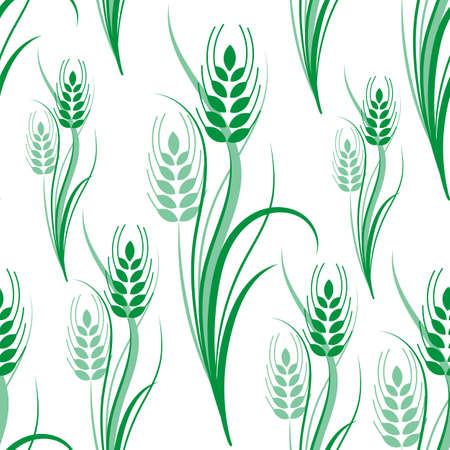 Seamless pattern with green wheat spikelets on a white isolated background. Vector illustration