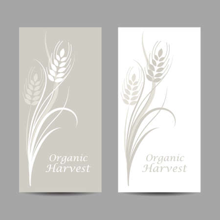 Set of vertical banners. Wheat spikelet on white and gray background 일러스트