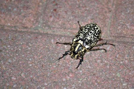 ugly scary bug that walks on the floor