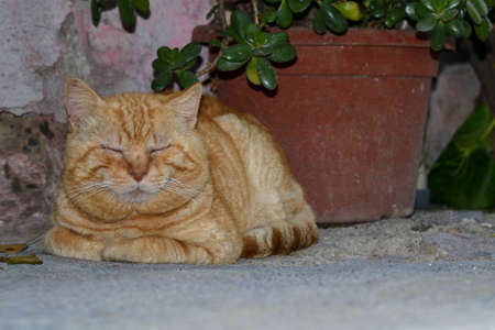 red cat resting with closed eyes crouching on a cool stone floor in the shadow of a plant beside the wall of a house Imagens