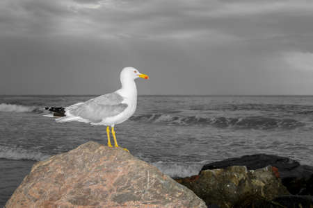 seagull leaning against a rock on the sea waiting for the storm coming from the sea Stock Photo