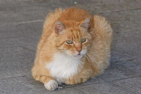beautiful red and white cat with green eyes crouching on a stone floor