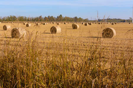 hay bales and rice eels in a field that has just been plowed