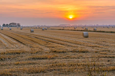 stretching of hay bales in cylinder form, in a cereal field, during a late summer sunset