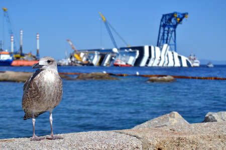 albatros leaning against a rock and behind him the demolition of a cruise ship sunk off the Giglio island, Italy