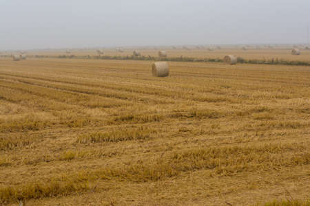 spreading hay bales in a field, immersed in the fog Banque d'images - 96000162