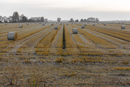 stretching of hay bales in cylinder form, in a cereal field, during a late summer sunset Banque d'images - 96142185