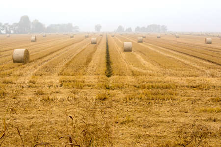 spreading hay bales in a field, immersed in the fog Banque d'images - 99394435