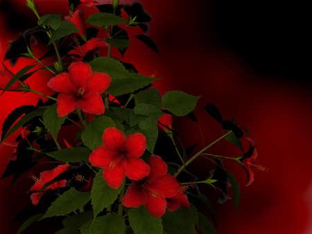 Red hibiscus Stock Photo - 13625391