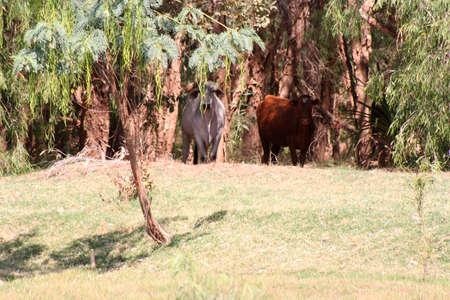 West Australia - Knunurra - Ordriver bank, hidden