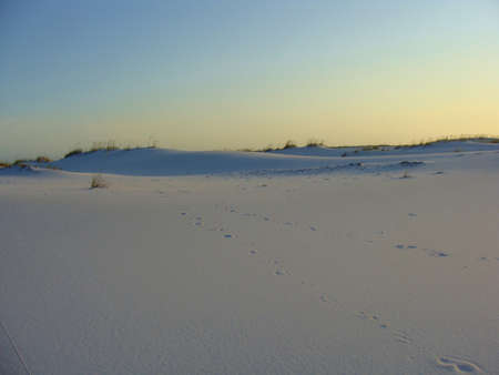 Dunes and Pristine Sands of the Florida Gulf Coast
