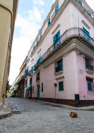 low perspective: a brown dog sleeping on an empty street in havana, taken from a low perspective with a pink house in the background