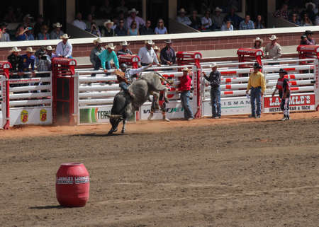 stampede: cowboy riding a grey bull in the calgary stampede arena with the audience watching