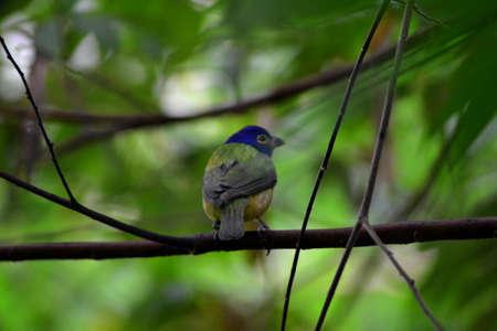A bird standing on a bench