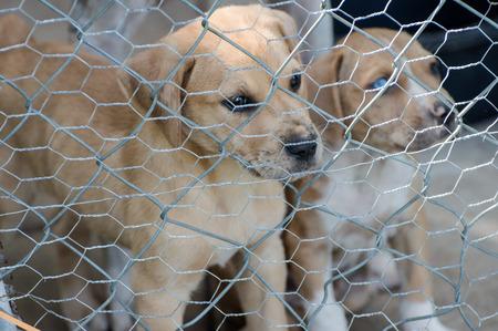 Puppy sad face looking between fence Фото со стока