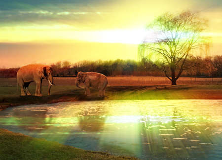father and baby elephants  at watering hole at sundown scene