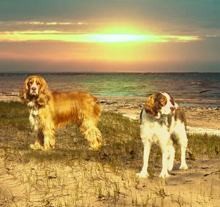 two dogs on a beach at sunset