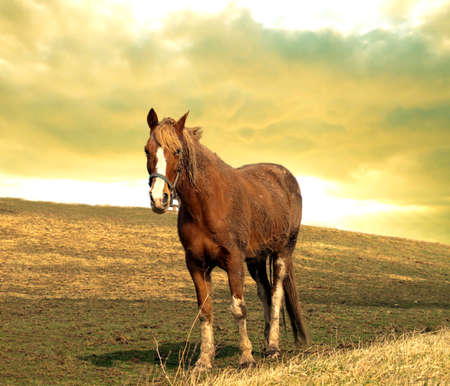 horse out on a hill at sunset