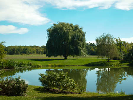 lush green landscape with pond