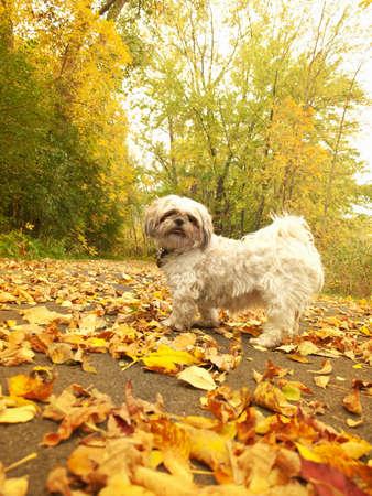 przewidywanie: pies patrząc na właściciela w oczekiwaniu na spacer w parku