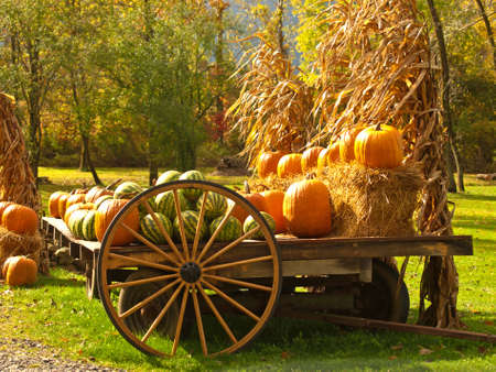 pumpkins and watermelons autumn scene Stock Photo - 15761059