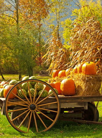 watermelons and pumpkins on cart in autumn scene