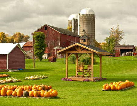 working farm in autumn selling pumpkins and gourds Stock Photo - 16152373