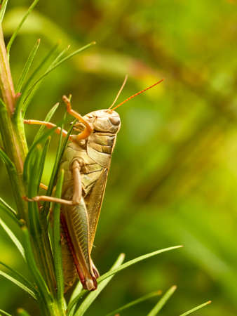 grasshopper resting on a plant