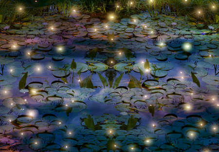fireflies and water lily pond depiction
