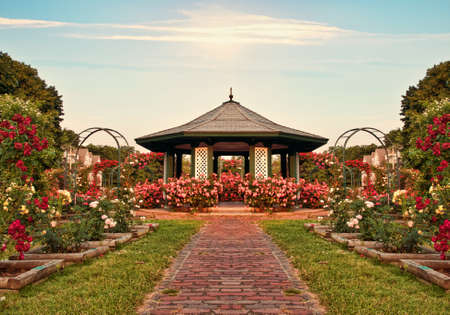 beautiful formal rose garden late in the day photo