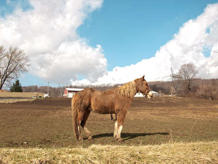 farm horse out in the pasture on a beautiful day