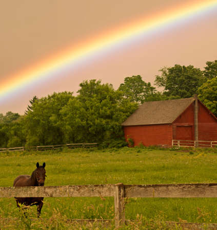 country landscape with horse and rainbow Editorial