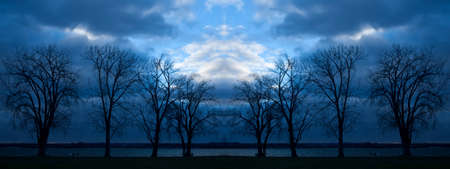 silhouette of trees at nightfall
