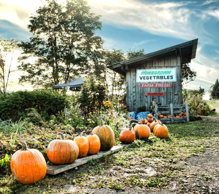 roadside vegetable and pumpkin stand