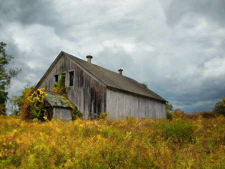 unkept: old time warn and weathered abandoned gray barn in autumn