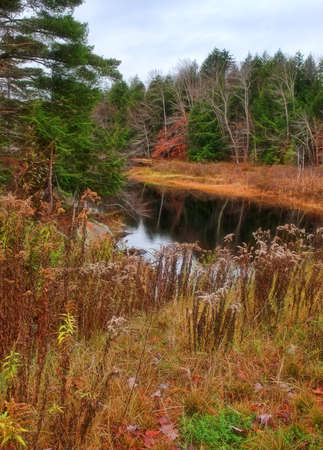 Creek in the Adirondack State Forest Stock Photo