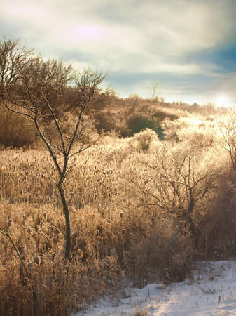 rural field at sundown in the wintertime Stock Photo