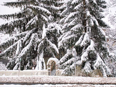 Home hidden by snow covered Fir Trees