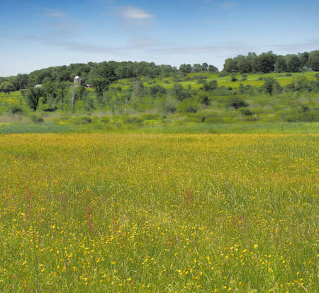 Farmland with meadow ful of Buttercups Stock Photo