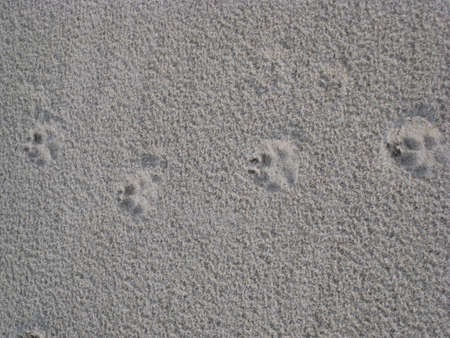 puppy footprints in the sand Stock Photo - 2377352