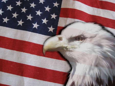 patriotic eagle Stock Photo - 2759520